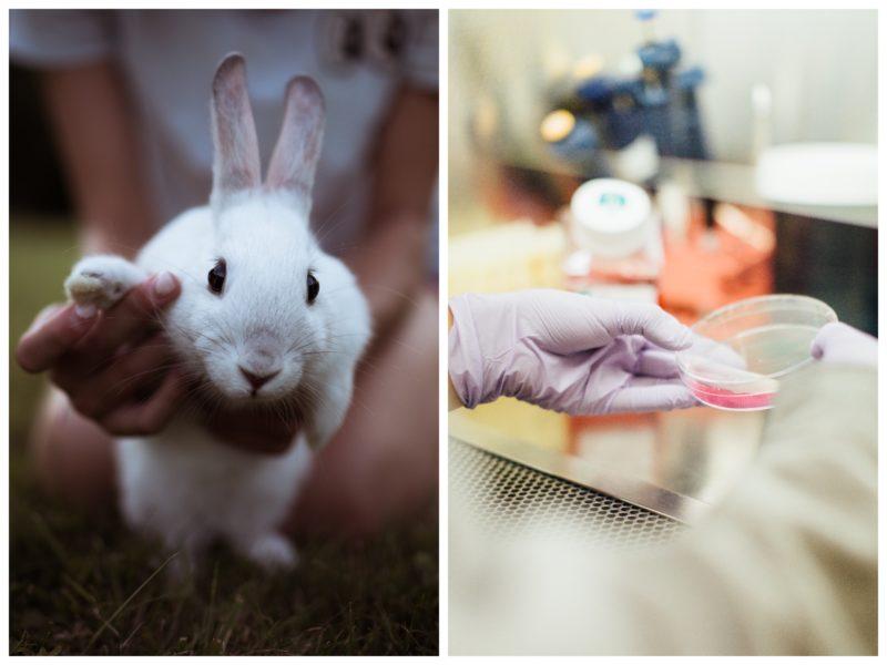 chiny rezygnują z testowania kosmetyków na zwierzętach