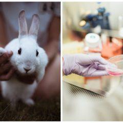 Przełomowa wiadomość – Chiny wycofują się z testowania kosmetyków na zwierzętach